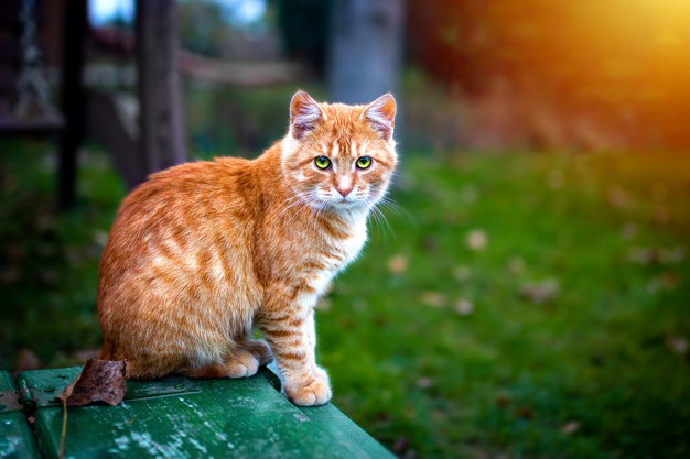 loppemiddel katte